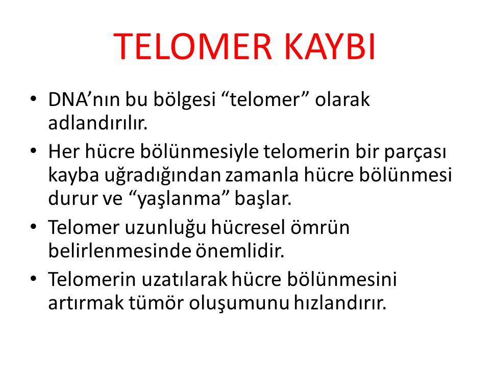 TELOMER KAYBI DNA'nın bu bölgesi telomer olarak adlandırılır.