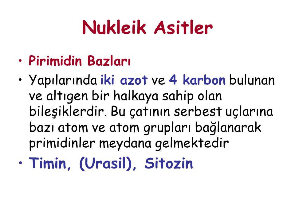 Nukleik Asitler Timin, (Urasil), Sitozin Pirimidin Bazları