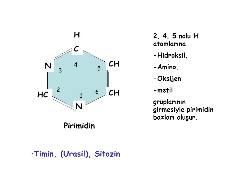 Timin, (Urasil), Sitozin