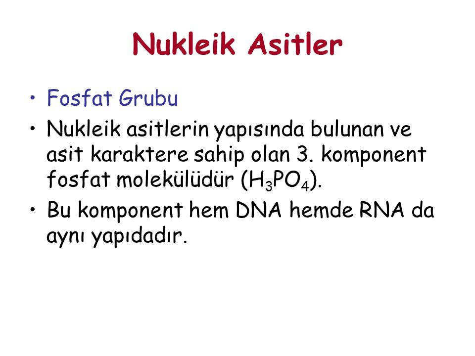 Nukleik Asitler Fosfat Grubu