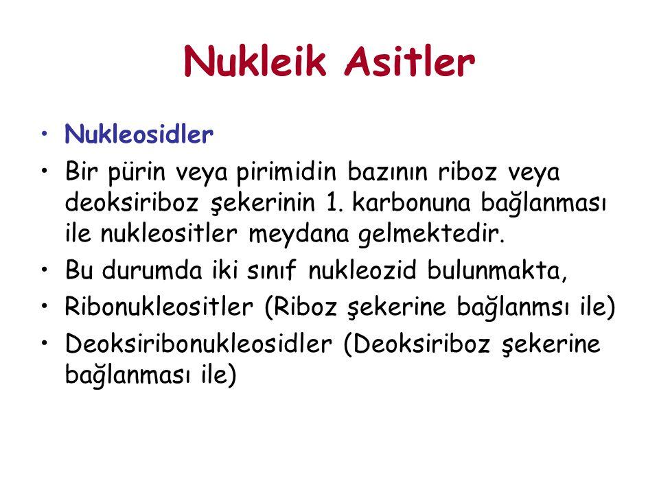 Nukleik Asitler Nukleosidler