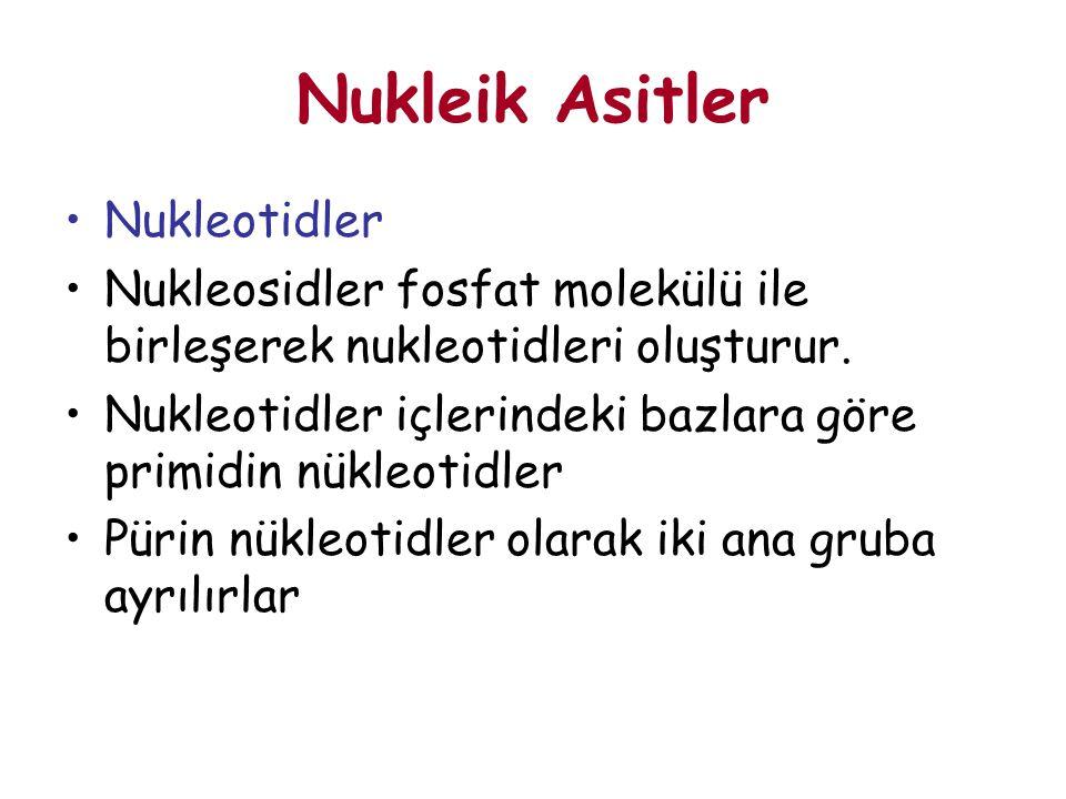 Nukleik Asitler Nukleotidler