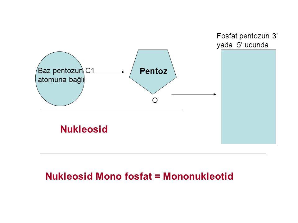 Nukleosid Mono fosfat = Mononukleotid
