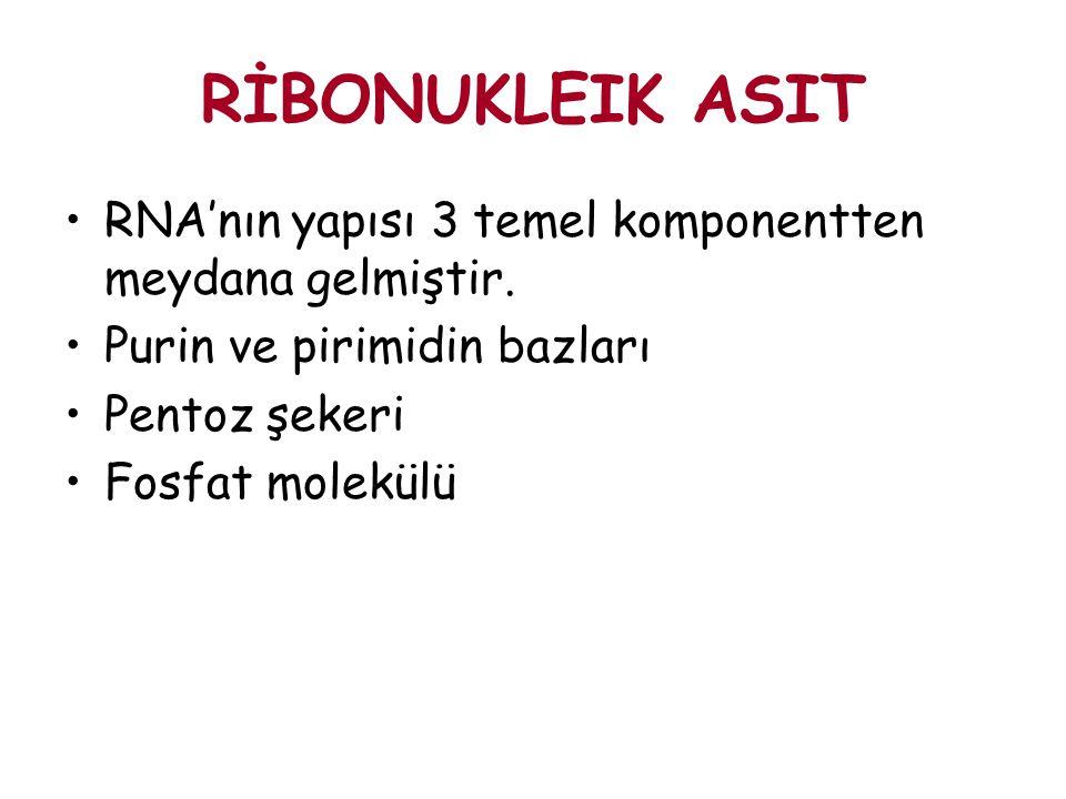 RİBONUKLEIK ASIT RNA'nın yapısı 3 temel komponentten meydana gelmiştir. Purin ve pirimidin bazları.