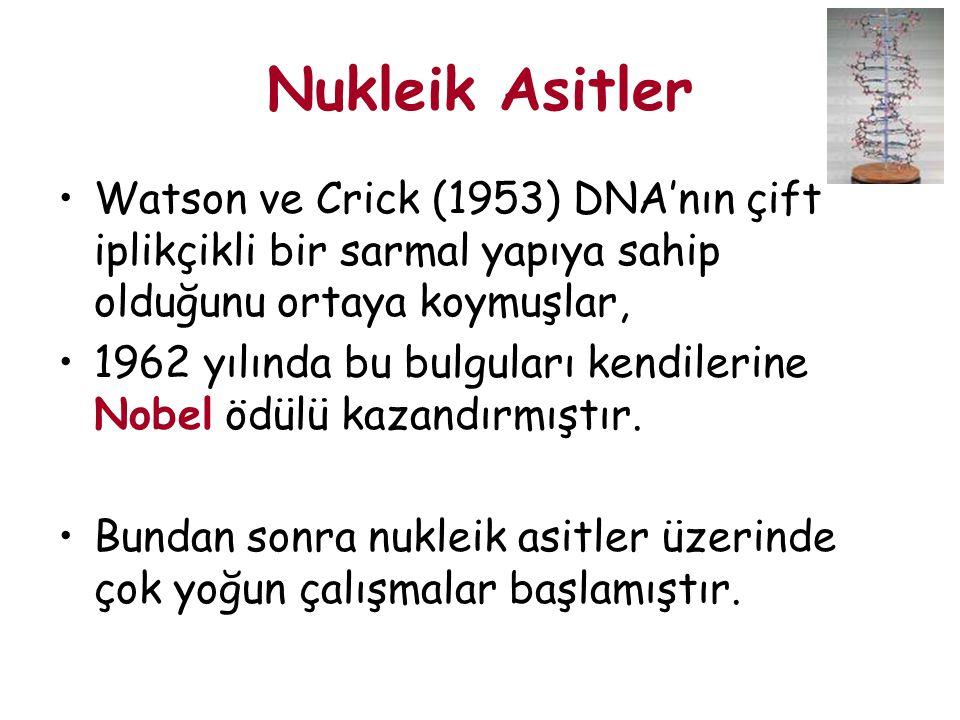 Nukleik Asitler Watson ve Crick (1953) DNA'nın çift iplikçikli bir sarmal yapıya sahip olduğunu ortaya koymuşlar,