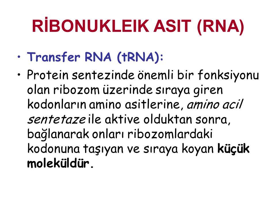 RİBONUKLEIK ASIT (RNA)