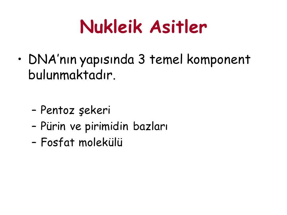 Nukleik Asitler DNA'nın yapısında 3 temel komponent bulunmaktadır.