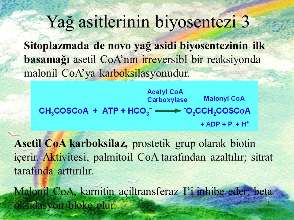 Yağ asitlerinin biyosentezi 3
