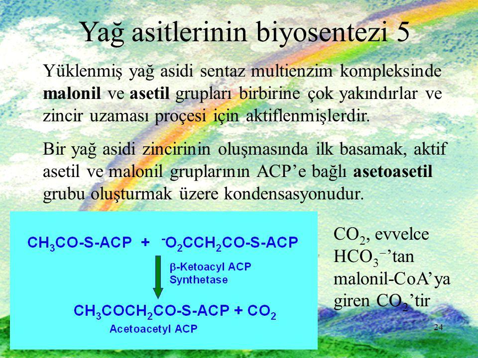 Yağ asitlerinin biyosentezi 5
