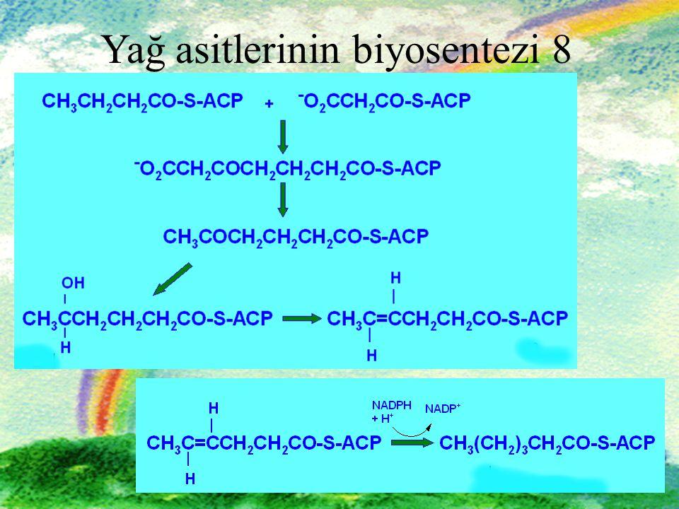 Yağ asitlerinin biyosentezi 8