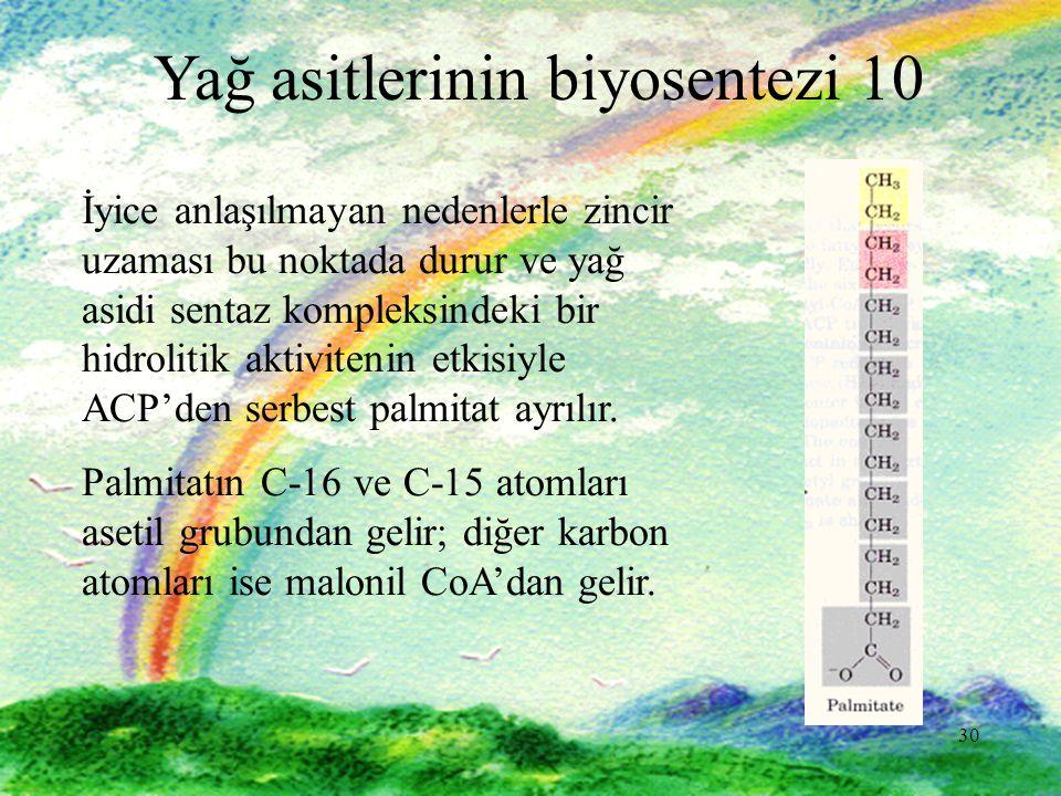 Yağ asitlerinin biyosentezi 10