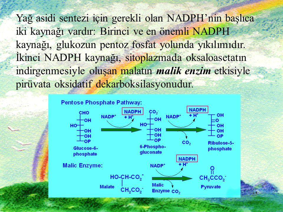Yağ asidi sentezi için gerekli olan NADPH'nin başlıca iki kaynağı vardır: Birinci ve en önemli NADPH kaynağı, glukozun pentoz fosfat yolunda yıkılımıdır. İkinci NADPH kaynağı, sitoplazmada oksaloasetatın indirgenmesiyle oluşan malatın malik enzim etkisiyle pirüvata oksidatif dekarboksilasyonudur.