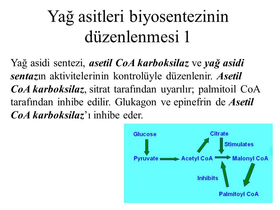 Yağ asitleri biyosentezinin düzenlenmesi 1