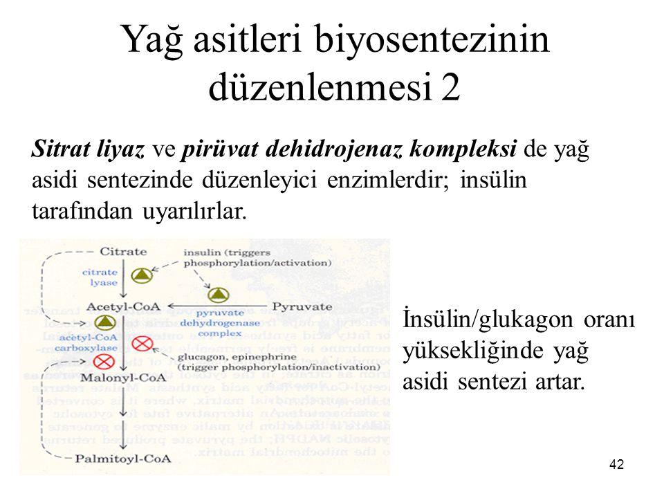 Yağ asitleri biyosentezinin düzenlenmesi 2