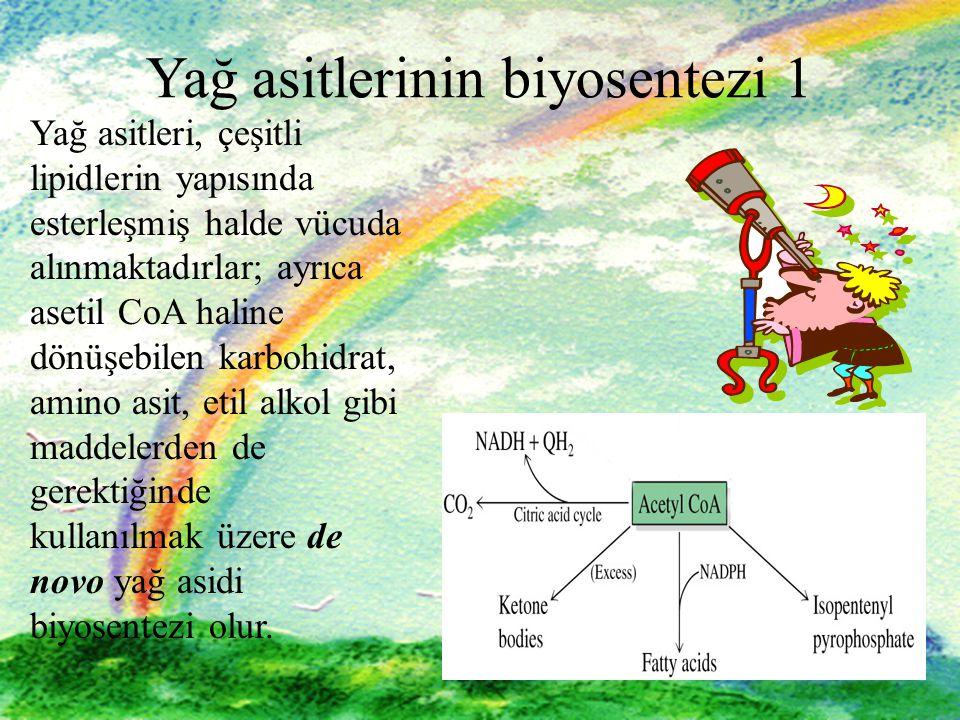 Yağ asitlerinin biyosentezi 1