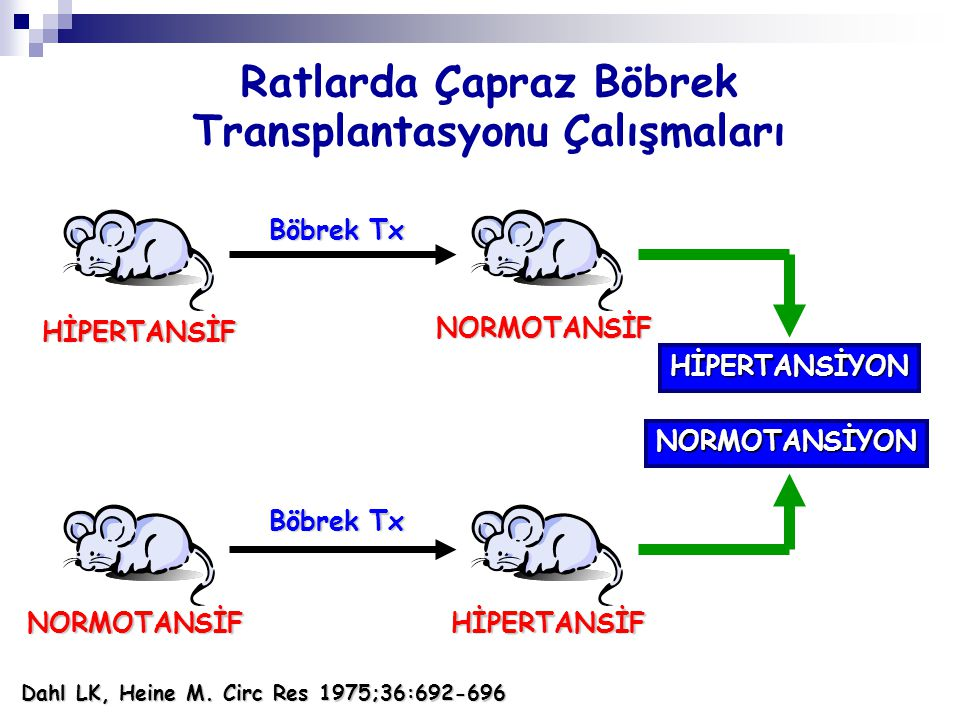 Ratlarda Çapraz Böbrek Transplantasyonu Çalışmaları