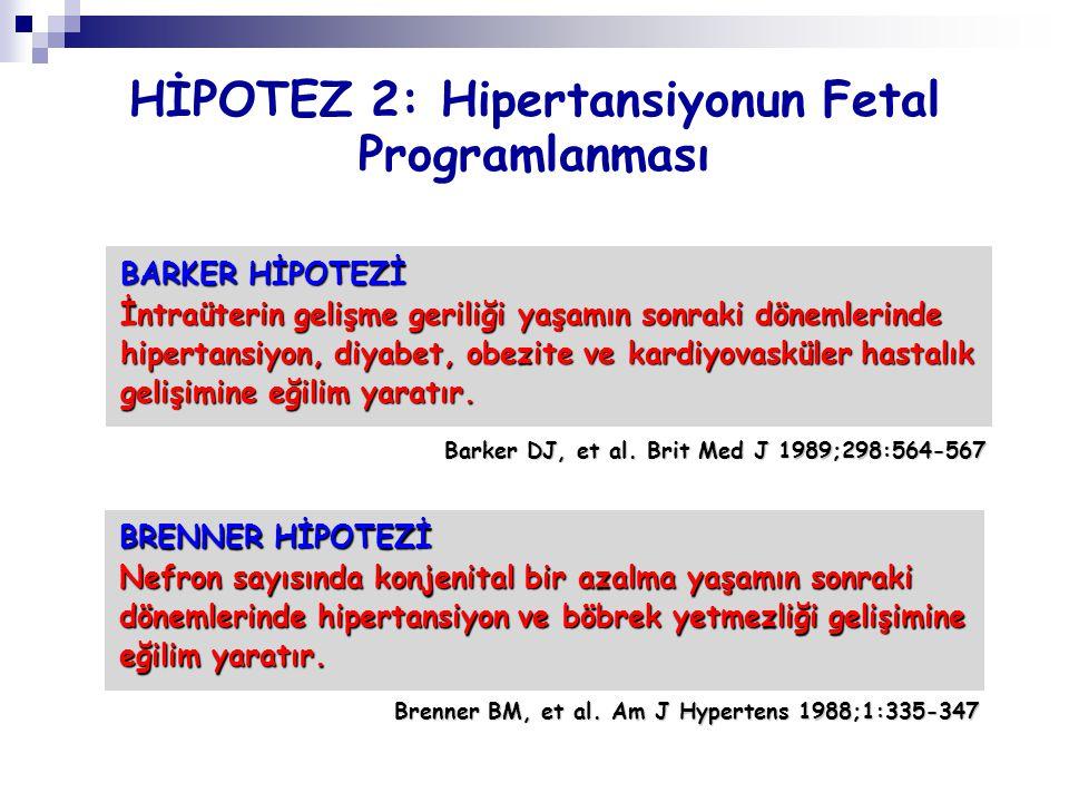 HİPOTEZ 2: Hipertansiyonun Fetal Programlanması