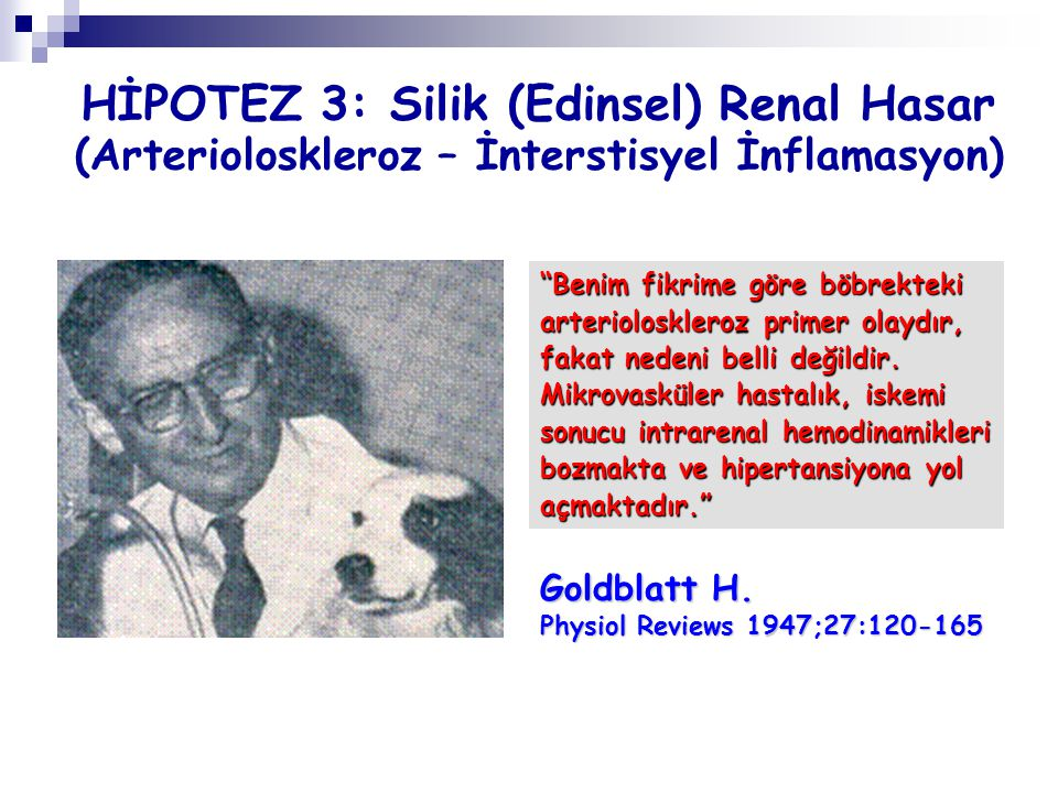 HİPOTEZ 3: Silik (Edinsel) Renal Hasar (Arterioloskleroz – İnterstisyel İnflamasyon)