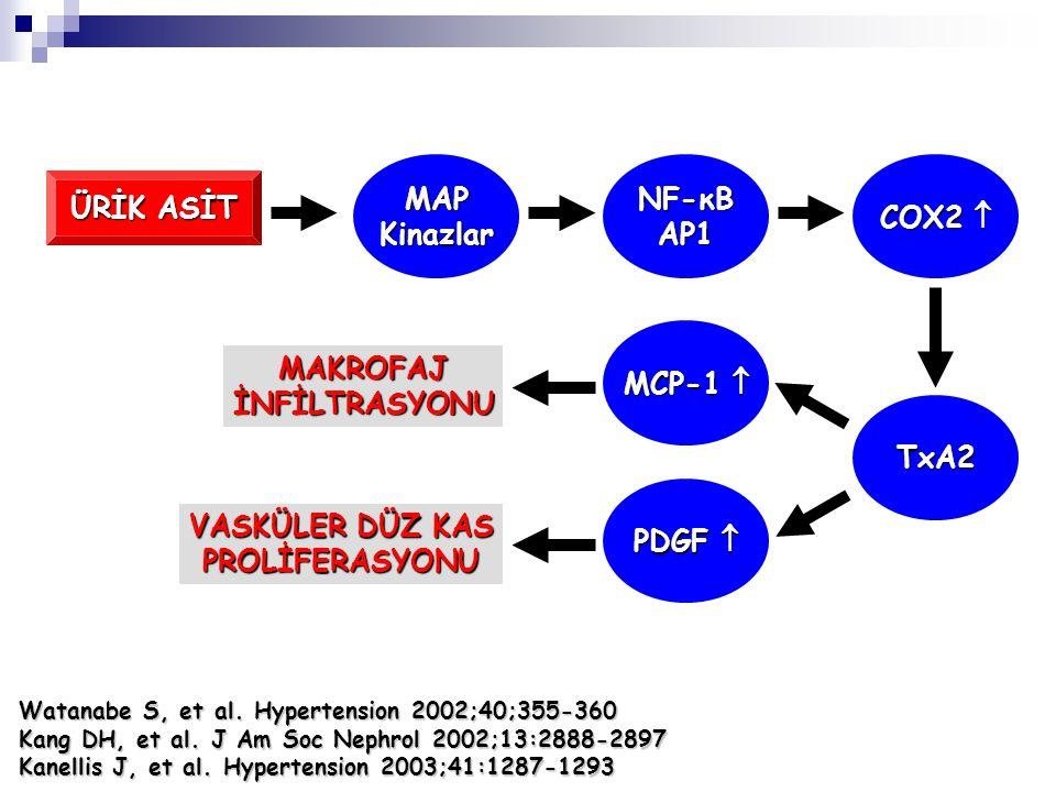 MAP Kinazlar NF-κB AP1 COX2  ÜRİK ASİT MCP-1  MAKROFAJ İNFİLTRASYONU