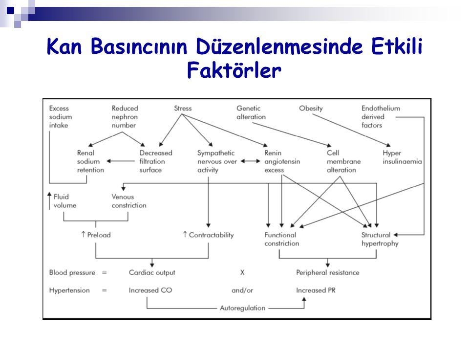 Kan Basıncının Düzenlenmesinde Etkili Faktörler
