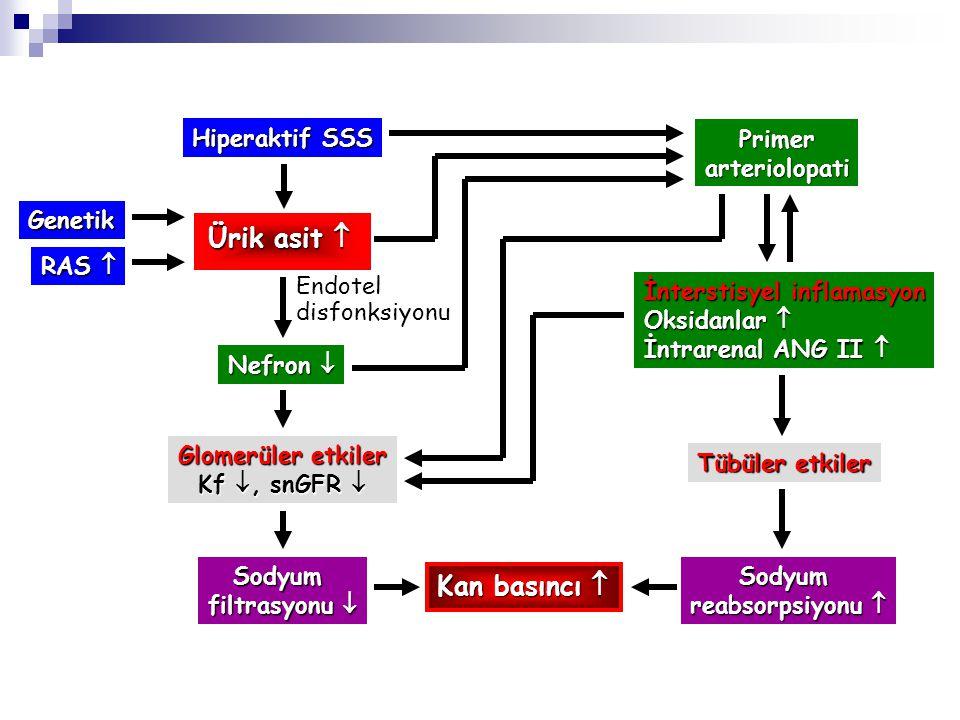Ürik asit  Kan basıncı  Hiperaktif SSS Primer arteriolopati Genetik
