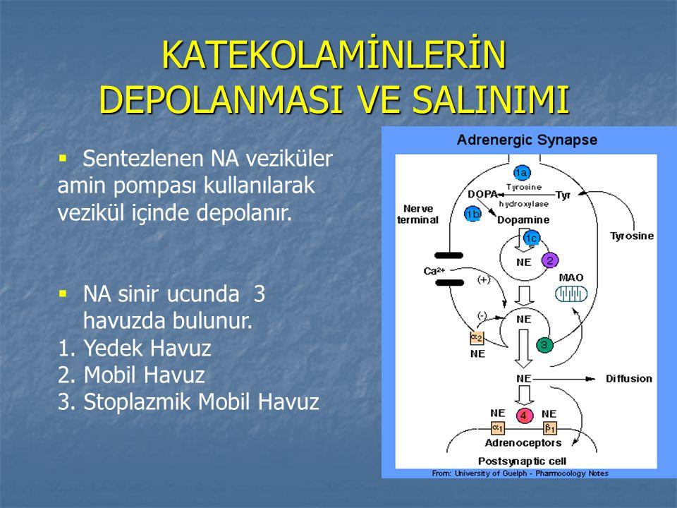 KATEKOLAMİNLERİN DEPOLANMASI VE SALINIMI