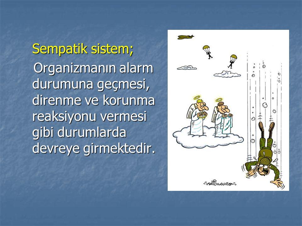 Sempatik sistem; Organizmanın alarm durumuna geçmesi, direnme ve korunma reaksiyonu vermesi gibi durumlarda devreye girmektedir.