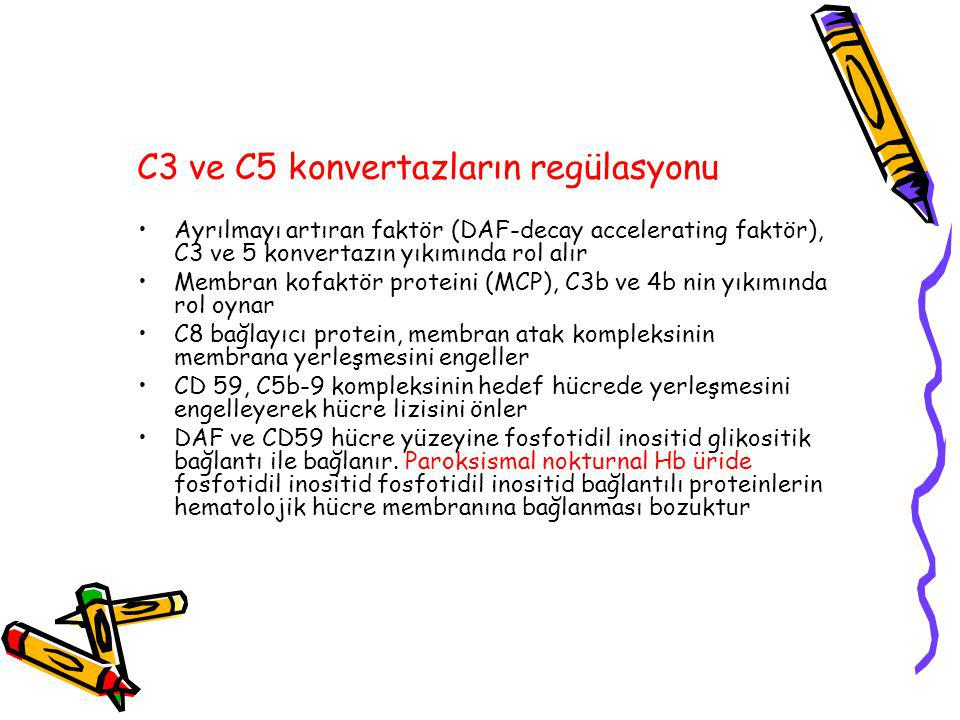 C3 ve C5 konvertazların regülasyonu