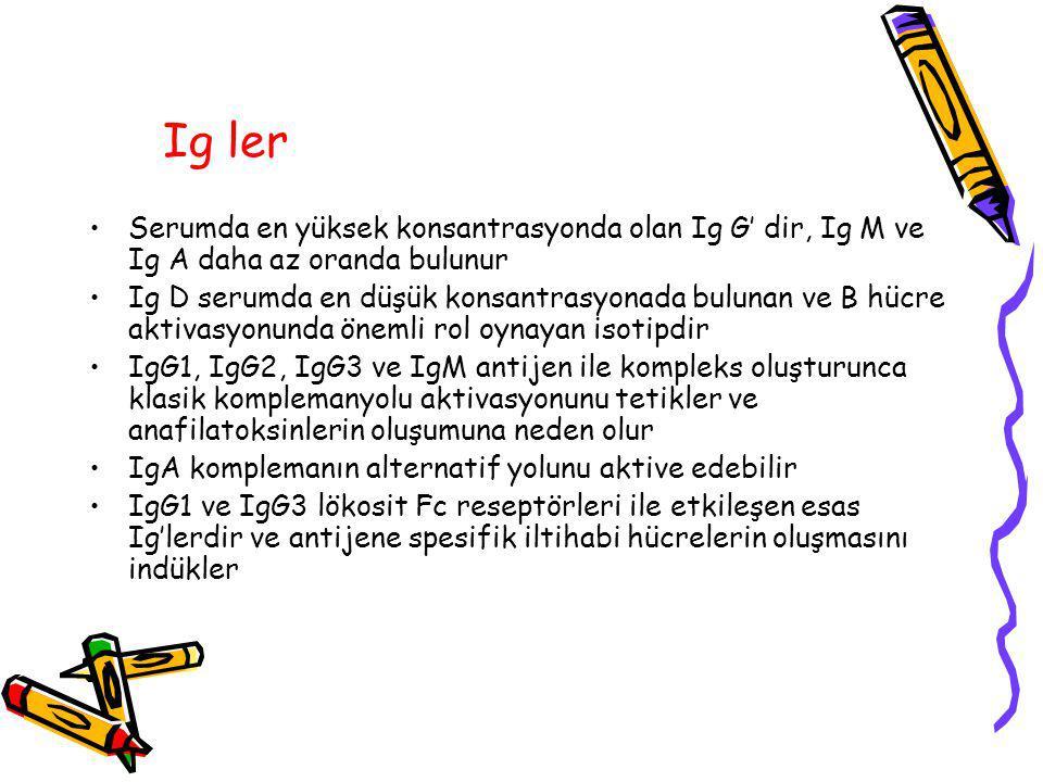 Ig ler Serumda en yüksek konsantrasyonda olan Ig G' dir, Ig M ve Ig A daha az oranda bulunur.