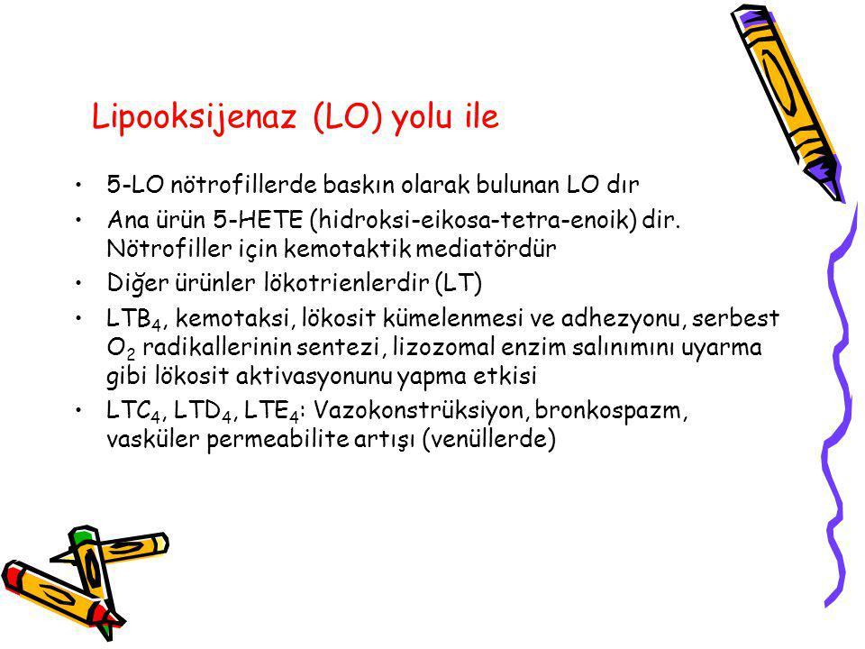 Lipooksijenaz (LO) yolu ile