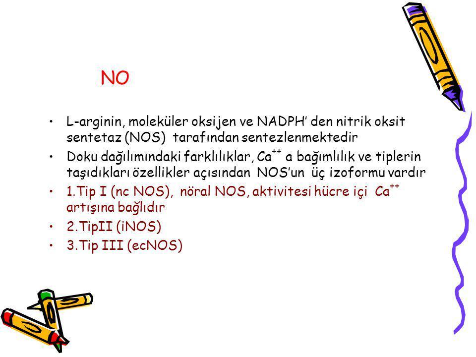 NO L-arginin, moleküler oksijen ve NADPH' den nitrik oksit sentetaz (NOS) tarafından sentezlenmektedir.