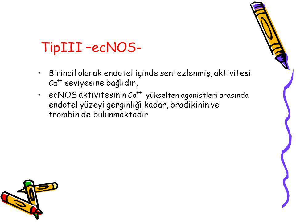 TipIII –ecNOS- Birincil olarak endotel içinde sentezlenmiş, aktivitesi Ca++ seviyesine bağlıdır,