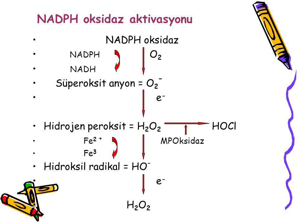 NADPH oksidaz aktivasyonu