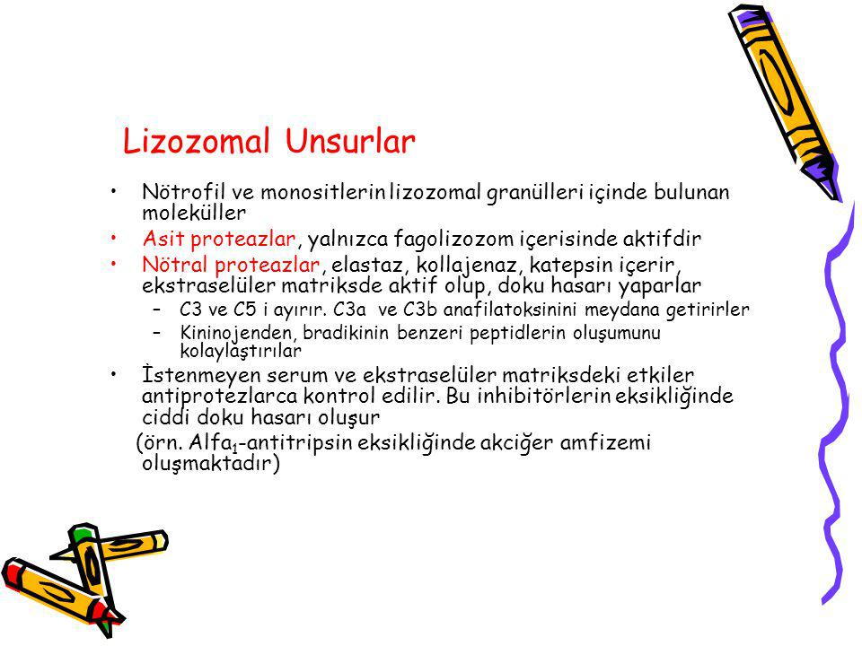 Lizozomal Unsurlar Nötrofil ve monositlerin lizozomal granülleri içinde bulunan moleküller.