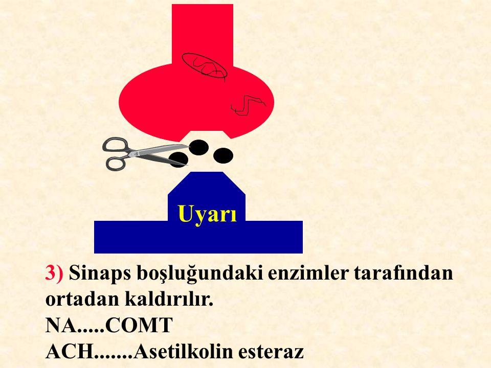 Uyarı 3) Sinaps boşluğundaki enzimler tarafından ortadan kaldırılır.