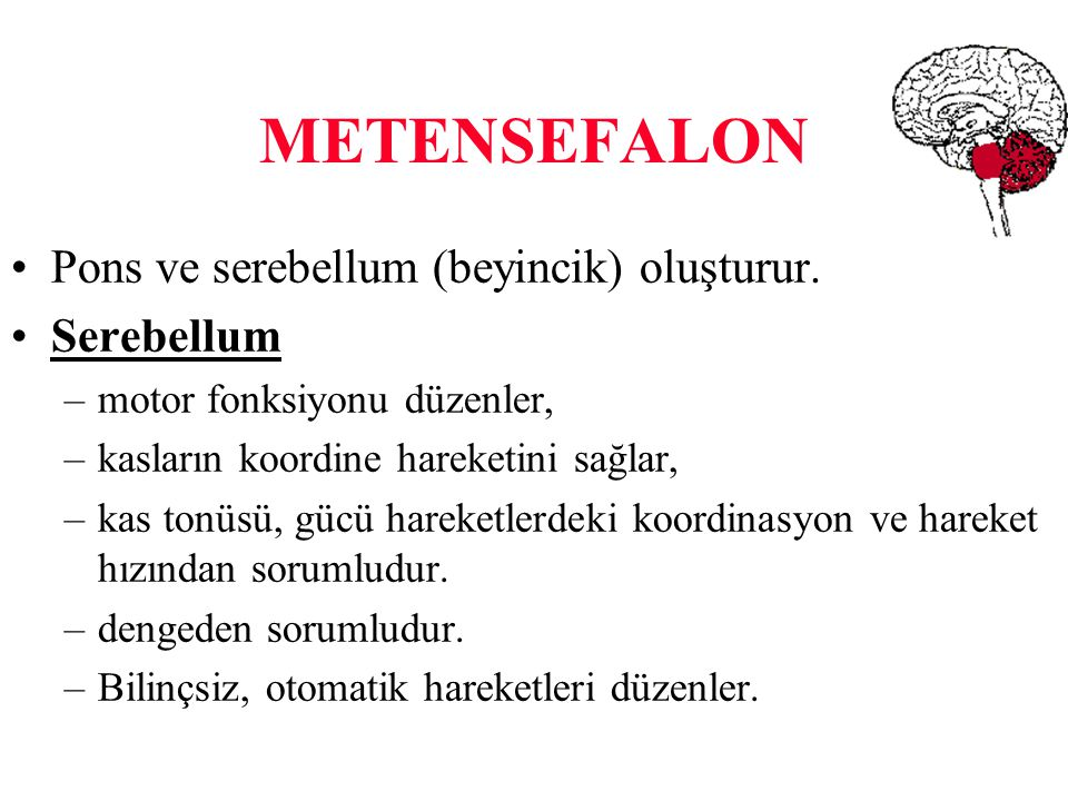METENSEFALON Pons ve serebellum (beyincik) oluşturur. Serebellum