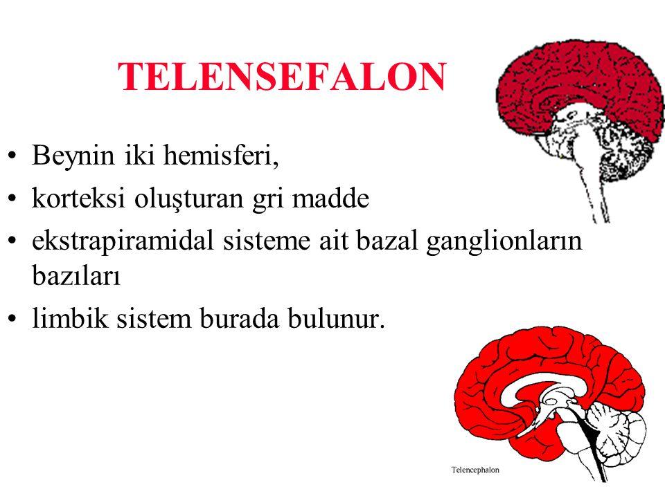 TELENSEFALON Beynin iki hemisferi, korteksi oluşturan gri madde
