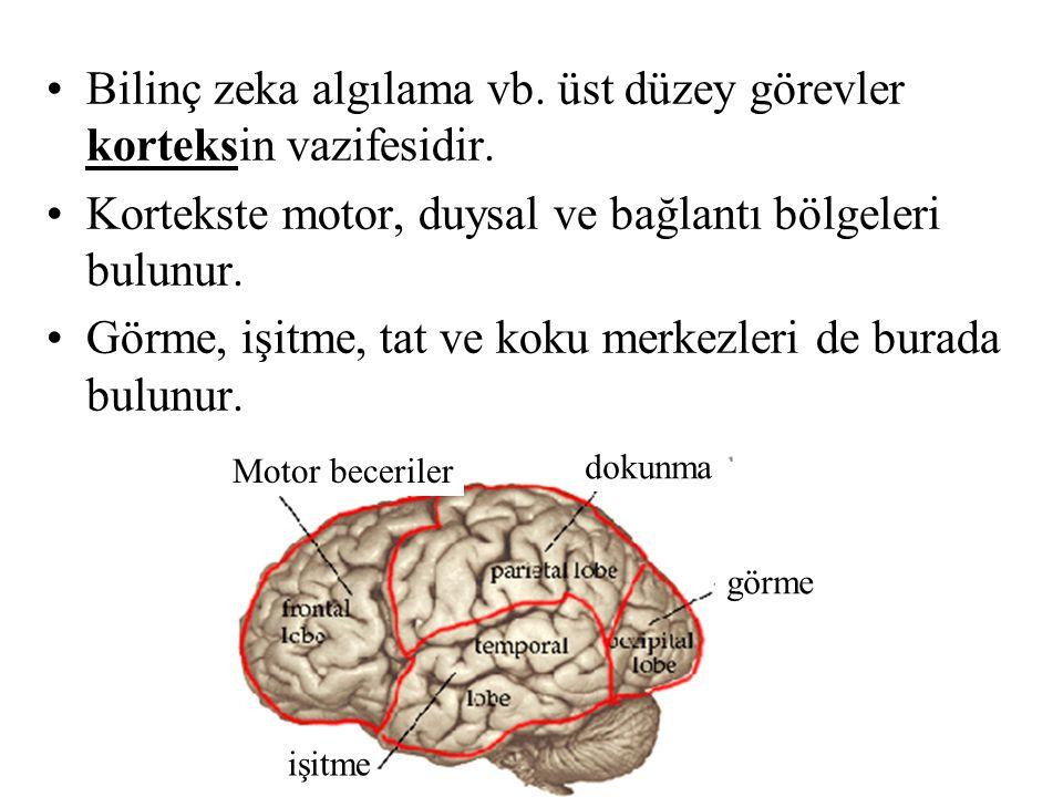 Bilinç zeka algılama vb. üst düzey görevler korteksin vazifesidir.