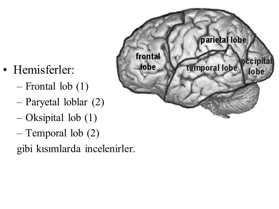 Hemisferler: Frontal lob (1) Paryetal loblar (2) Oksipital lob (1)