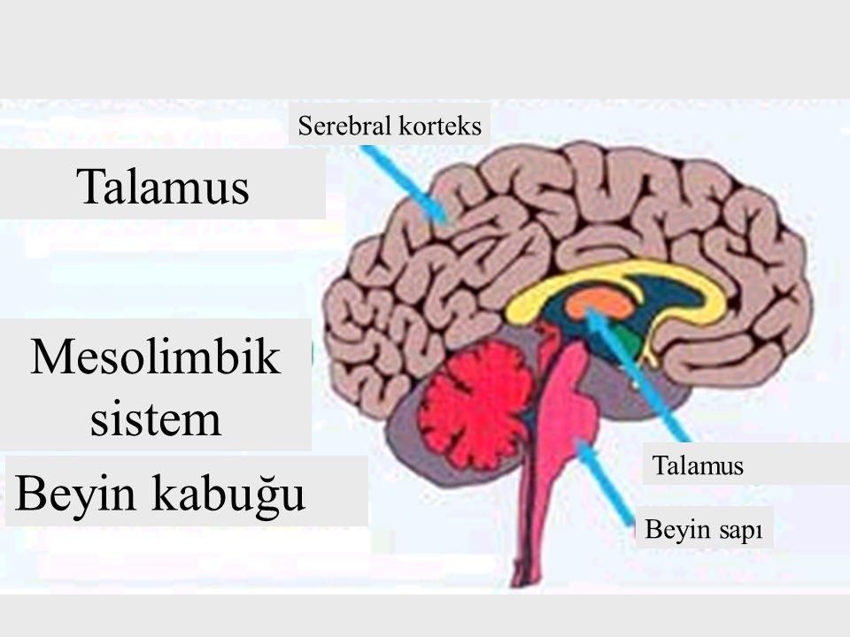 Talamus Mesolimbik sistem Beyin kabuğu Serebral korteks Talamus