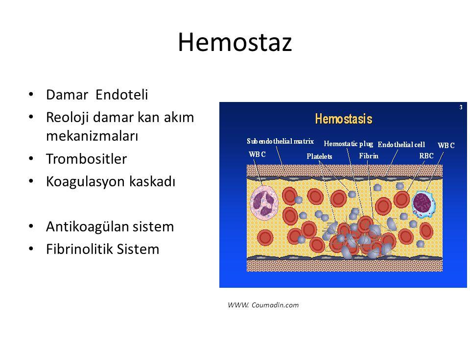Hemostaz Damar Endoteli Reoloji damar kan akım mekanizmaları