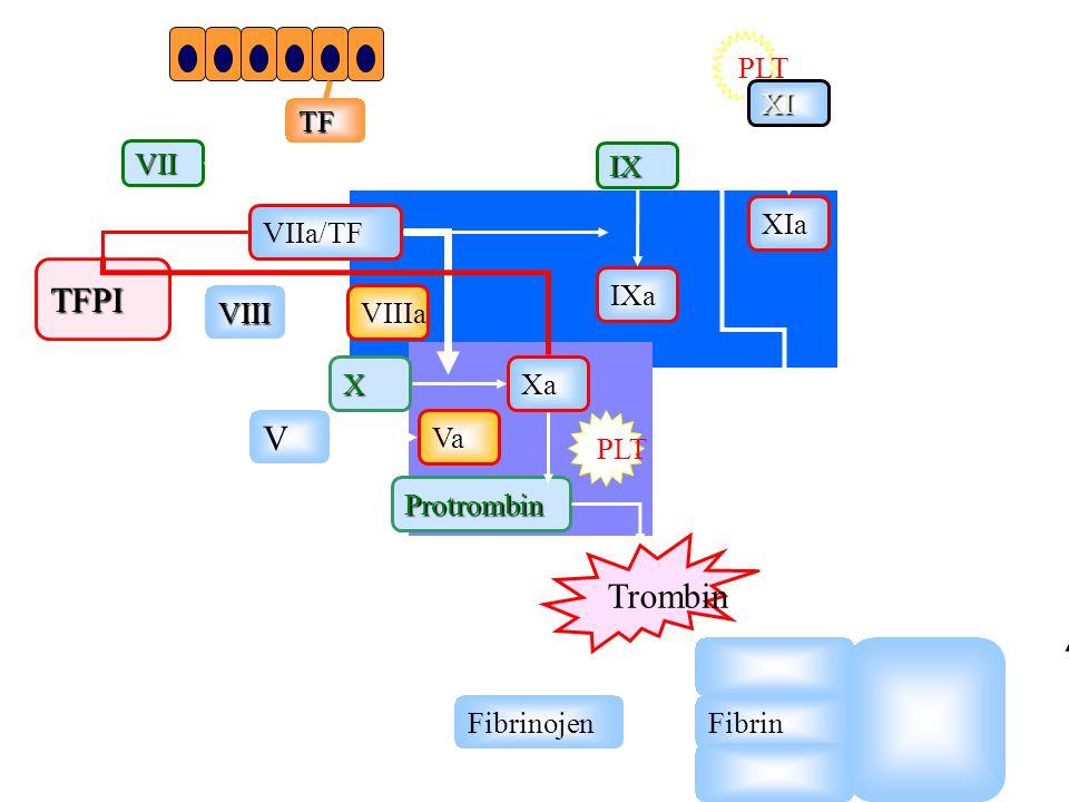 TFPI V Trombin PLT XI TF VII IX XIa VIIa/TF IXa VIII VIIIa X Xa Va PLT