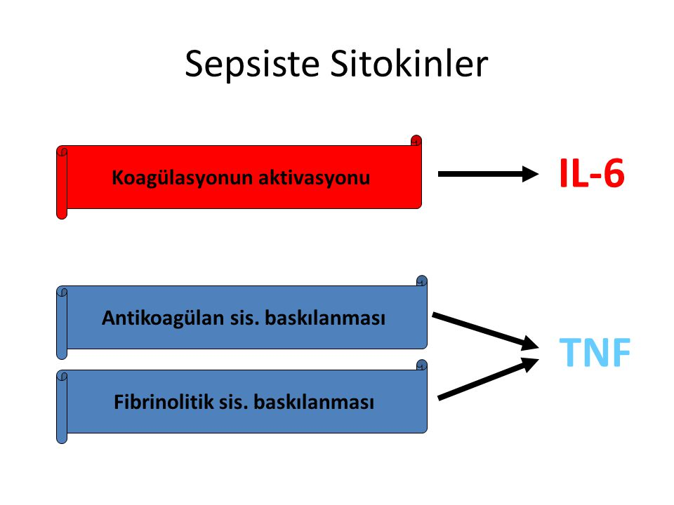 IL-6 TNF Sepsiste Sitokinler Koagülasyonun aktivasyonu