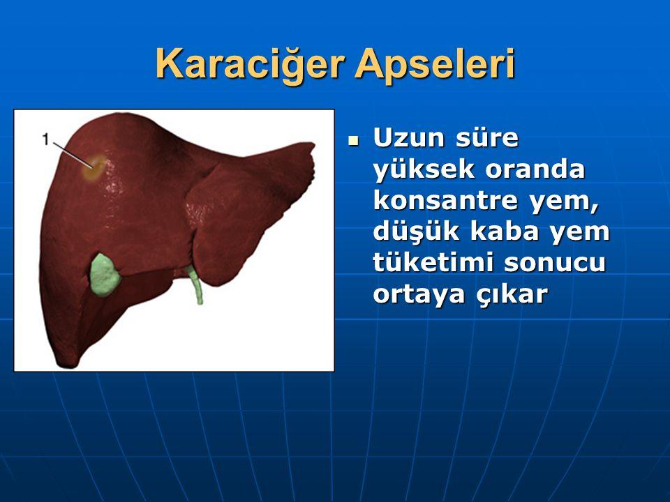 Karaciğer Apseleri Uzun süre yüksek oranda konsantre yem, düşük kaba yem tüketimi sonucu ortaya çıkar.