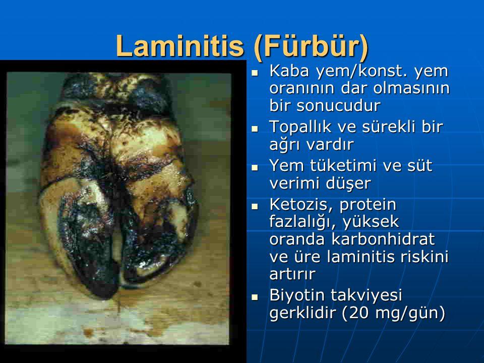 Laminitis (Fürbür) Kaba yem/konst. yem oranının dar olmasının bir sonucudur. Topallık ve sürekli bir ağrı vardır.