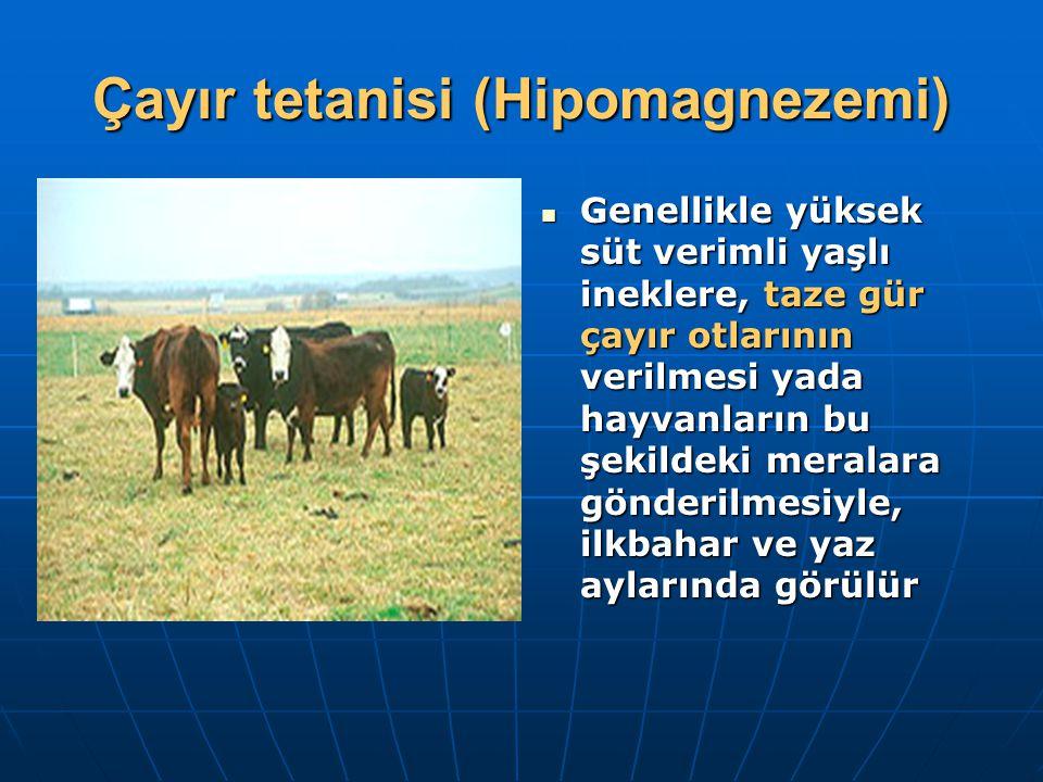 Çayır tetanisi (Hipomagnezemi)