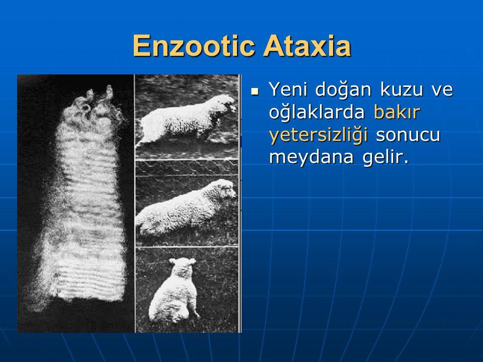 Enzootic Ataxia Yeni doğan kuzu ve oğlaklarda bakır yetersizliği sonucu meydana gelir.