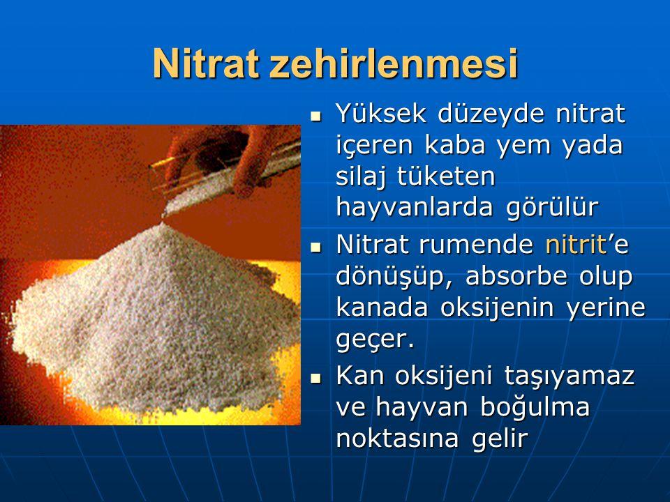 Nitrat zehirlenmesi Yüksek düzeyde nitrat içeren kaba yem yada silaj tüketen hayvanlarda görülür.