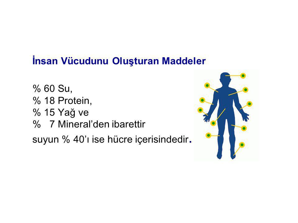 İnsan Vücudunu Oluşturan Maddeler