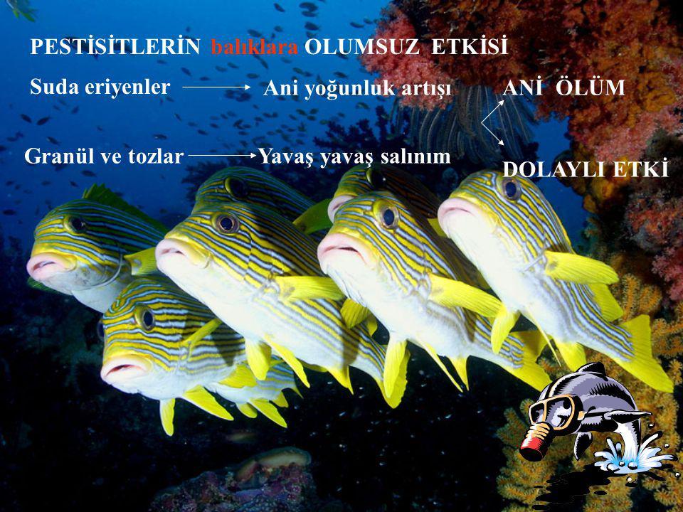 PESTİSİTLERİN balıklara OLUMSUZ ETKİSİ